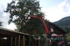 Für die Fertigstellung des Carport-Daches muss ein Ast weichen ....